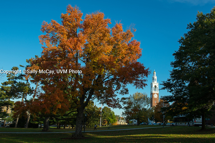Fall Foliage on the Waterman Green, Fall UVM Campus