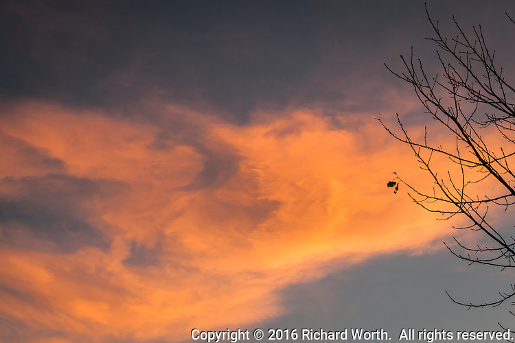 The last leaf, or two, dangling from bare branches against a sunset streaked winter sky.