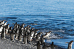 Penguin Colony at Brown Bluff, Antarctic Sound, Antarctica