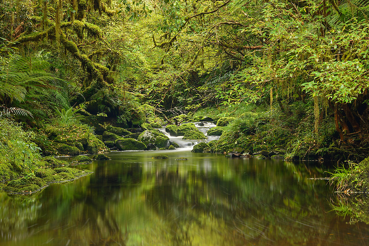 The beautiful Tautuku river, below the McLean falls. Catlins Forest Park, Southland.
