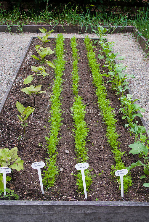 Garden design on emaze for How to plant a raised vegetable garden