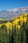 The Ruby Range above autumn quaking aspens, Gunnison National Forest, Colorado