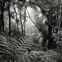 Rainforest in black and white, South Island, New Zealand.
