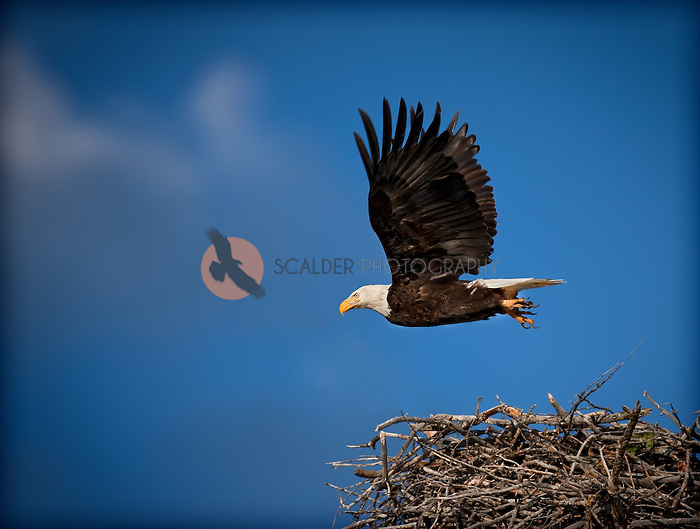 Bird flying from nest - photo#6