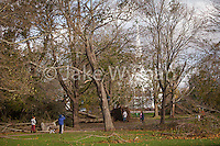 Damage to the trees on the Guilford Green, the day after Hurricane Sandy swept through Guilford Connecticut.