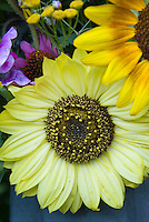 Sunflower Valentine - lemon light yellow sunflowers cut flowers vase