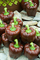 Chocolate colored brown Bell Peppers picked and group