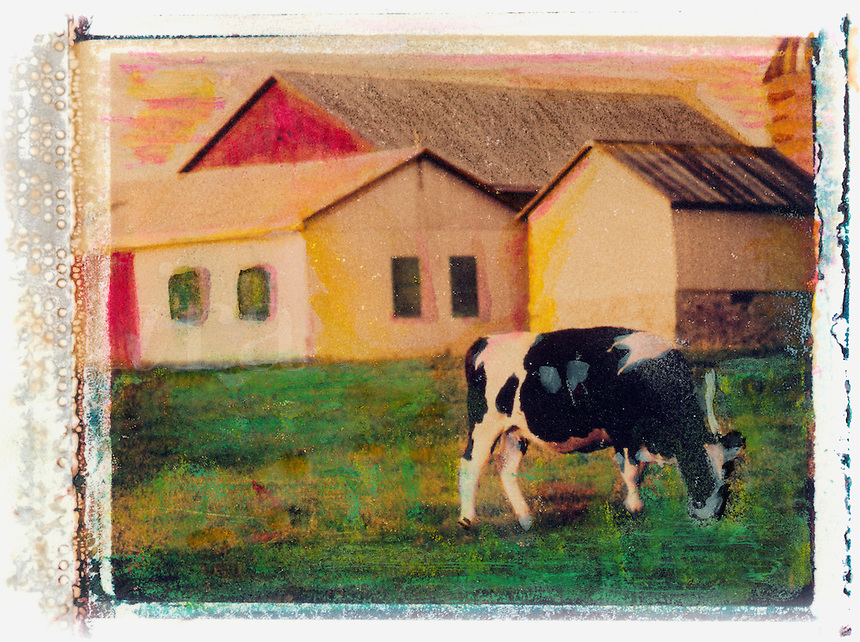 Polaroid transfer of a dairy cow and barn.<br />