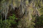 Gums, oaks and Spanish moss near Bluffton, S.C.