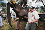Vasectomy of wild elephant, Loxodonta africana, with Dr Jeff Zuba of the Elephant Population Management Program, senior associate veterinarian of the San Diego Zoologicial Society. Dr Zuba developed the anaesthetic techniques for the procedure. Private game reserve in Limpopo, South Africa