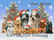Christmas animals cute - Giordano