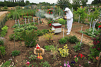 """In Valenton, Val de Marne, France, a garderner-apiculturist in the garden of association """"Le Jardin du Cheminot"""" opens a beehive, a cliché of traditional beekeeping."""