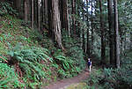 Hiker on trail in Forest of Nisene Marks SP