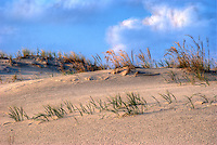 Scene of beach grasses on a windy day at Cape Henlopen, Delaware, a HDR image