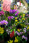 A display of orchids and other wild flowers at the Taipei Weekend Flower Market in Taipei, Taiwan.