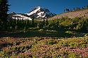 OR01640-00...OREGON - Heather covered meadow in Wy'east Basin at the base of Mount Hood in the Mount Hood Wilderness.