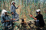 Marsh Arabs. Southern Iraq. Circa 1985. Marsh Arab men cutting reads making tea.