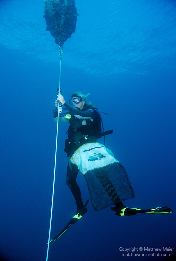 Moorea, French Polynesia; research assistant, Lindsey Carr, replaces a Physical Oceanigraphic recording device , Copyright © Matthew Meier, matthewmeierphoto.com All Rights Reserved