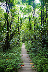 Walkway through the forest in Hana, Maui in Haleakala National Park at the Oheo Gulch