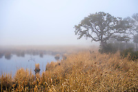 Calm blanket of fog covering the marsh at Duck, NC on the Outer Banks.