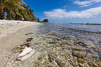 Conch shell, Laughing Brid Caye National Park, is a small isle 11 miles off the coast of Belize