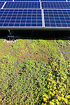 Scalo Solar - putting a green roof under a solar array reduces the roof tempature by of a white roof by over 60 degrees and increases the efficency of the solar panels significantly.