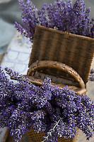 A picnic basket full of fresh lavender