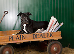 Pit Bull Terrier<br />