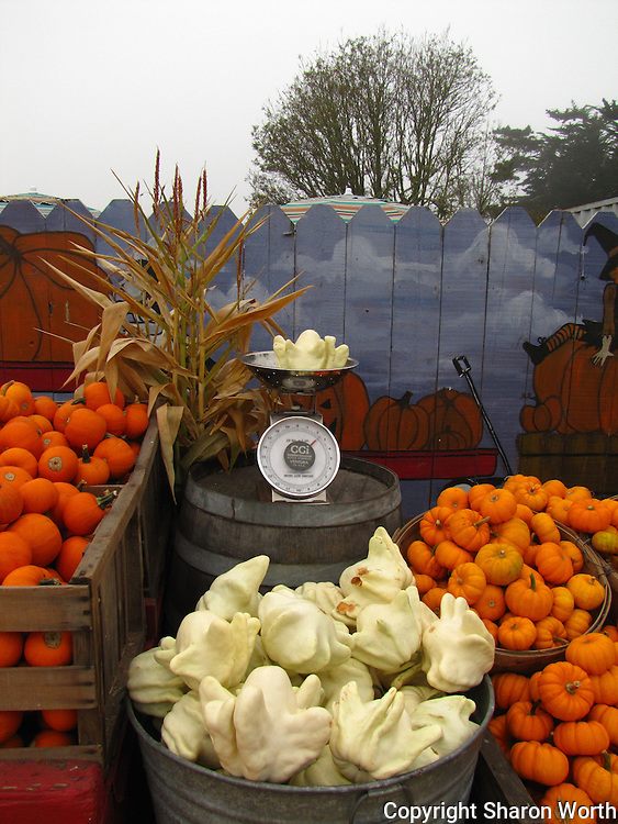 Eerie white gourds are among the items available at Pumpkin Depot in Half Moon Bay.