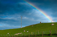 Ballycastle, Northern Ireland, United Kingdom, May 2011. A rainbow touches the grassy hills on Watertop farm. Watertop Farm is the hill farm of Patsy and Terry McBride.The name Watertop was chosen for the farm as a part of the Carey river rises as a fresh water spring nearby. The farm is a sheep farm, and keeps about 500 sheep, and 30 cows. In 1986 it opened to the public and became the first open farm in Ireland. Watertop farm is also a camping with caravan and tent sites with watrer and electricity. Famed in poetry, song, myth and magic there are nine Glens of Antrim, each endowed with an evocative name and each weaving its own special magic. Lush, green secret places with the sound of water alternately softly swirling, then falling in dramatic torrents, the nine Glens delight the senses.  Entwined with their rich beauties are equally diverse and magical stories, combining the colourful history, myth and the traditions of the communities within the glens. For decades travellers stayed away from the sectarian violence, but since the end of'The Troubles' more and more people start discoving the beauty of Belfast and the Antrim Coast Causeway. Photo by Frits Meyst/Adventure4ever.com