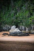 Coastal rock formations after twilight on Totaranui beach on Abel Tasman Coast Track, Abel Tasman National Park, Nelson Region, South Island, New Zealand