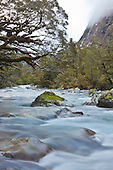 Hollyford River, Fiordland, New Zealand