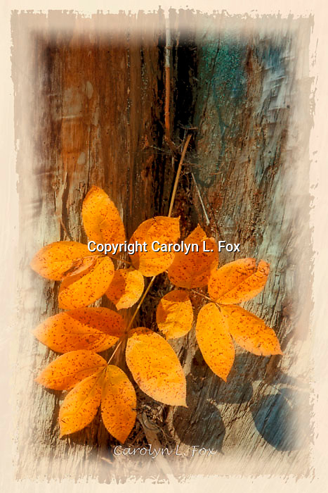Leaves lay against a tree trunk.  A border has been added to this image, but it can be ordered without it.
