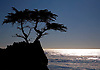 A lone cypress tree is perched along the rocky coast at the Pacific Ocean near Monterrey, California