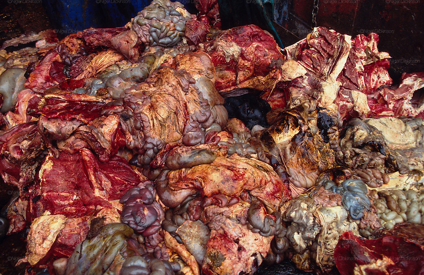 Abattoir. Mad Cows. Remnants of guts and internal organs suspected ...