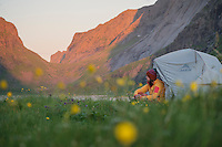 Female hiker sits outside tent surrounded by summer wild flowers, Horseid beach, Moskenesøy, Lofoten Islands, Norway