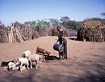 Turkana woman watering her family's herd , Turkana Northern Kenya, Africa