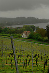 Grape vines growing on the slopes overlooking railway track and the lake Bodensee on a grey rainy day. Birnau, Lake Bodensee, Bavaria, Germany.