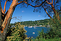 Boats and bay framed by Madrone trees at Westsound, Orcas Island; San Juan Islands, Washington.