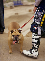 Bulldog on a leash being held by a  bike racer