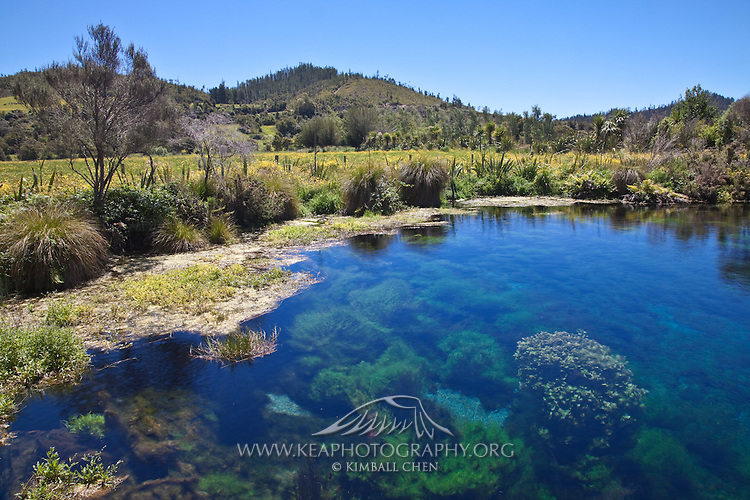 Pupu Springs | Kea Photography