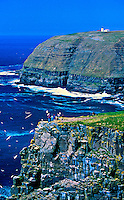 Cape St. Mary's Ecological Reserve, Avalon Peninsula, Newfoundland, Canada