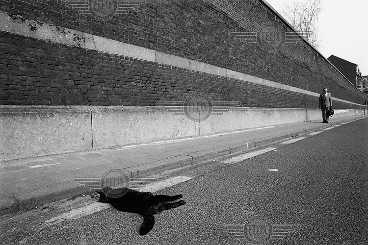 A man walking down a road along a high wall around a prison with a dead cat lying in the gutter.