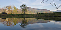 A lone tree is reflected in a small pond in Nelson County, VA. Photo/ Andrew Shurtleff