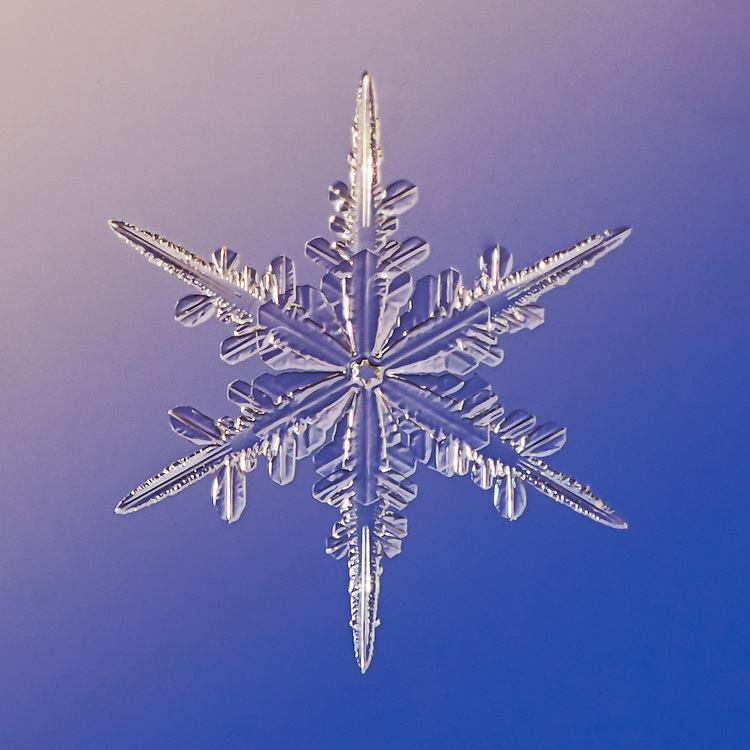 Snowflake Iolite - Stellar Dendrite Snowflake