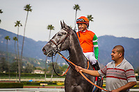 ARCADIA, CA - MARCH 04: Unique Bella #4, ridden by Mike Smith wins in the Santa Ysabel Stakes at Santa Anita Park on March 4, 2017 in Arcadia, California. (Photo by Zoe Metz/Eclipse Sportswire/Getty Images)