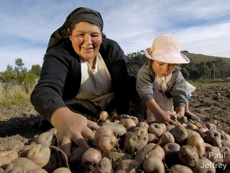 Indigenous residents of Cotani Alto, Bolivia, like other farmers in the high Andean altiplano, work hard to produce potatoes, the staple of their diet.