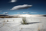 Remote sandy desert landscape with small patches of grass under a blue sky with white clouds