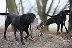 Foto: VidiPhoto<br /> <br /> ARNHEM - Jagers doen donderdag goede zaken rond de Rijkerswoerdse Plassen bij Arnhem. Boeren in de omgeving van het recreatiegebied hebben veel last van de overwinterende ganzen. Met duizenden tegelijk vliegen de ganzen dagelijks vanaf de plas richting ingezaaide akkers en kwetsbare weidegronden in het Rivierengebied. Jagers mogen daarom met speciale provinciale ontheffingen ganzen ook tijdens de winterrust rond de Rijkerswoerdse Plassen bejagen om schade zoveel mogelijk te beperken. De ganzen zorgen bovendien voor ernstige vervuiling van het populaire recreatiegebied met ligweiden voor zwemmers en zonaanbidders. Naast afschot worden er in het voorjaar ook eieren geprikt. De overzomerende ganzenpopulatie neemt nog steeds toe omdat veel natuurorganisaties weigeren mee te werken aan de bestrijding er van. Alleen al in Gelderland verblijven in de winterperiode ruim 1,6 miljoen ganzen.