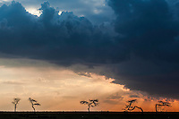 Dramatic storm with orange sky and threatening clouds over the Masai Mara Reserve, Kenya, Africa (photo by Wildlife Photographer Matt Considine)